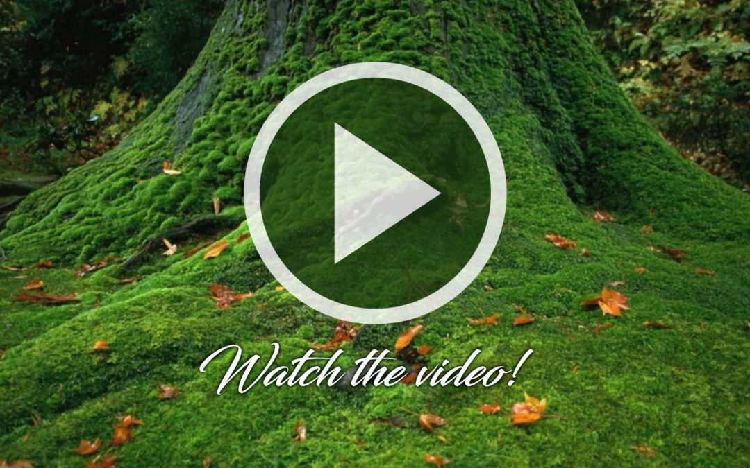 Watch the Day Trips Video